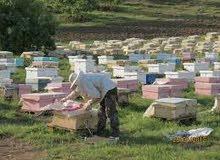 للبيع صناديق النحل بأسعار جد معقولة