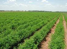 مطلوب مهندس زراعي لزراعات حقليه باذنجان باميا خيار وغيرها من المحاصيل الحقليه