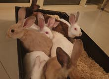 forever home for my loving rabbits .family of 2 parents and 6 kids