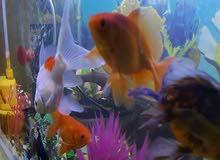 حوض أسماك زينة كامل