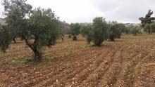 مزرعتين متلاصقتين منفصلتين للبيع