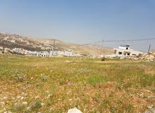 قطعة ارض للبيع في شفا بدران حوض أم العروق بسعر لقطة