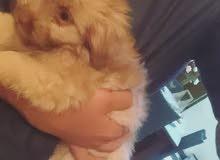 شنو نوع هذا الكلب؟؟