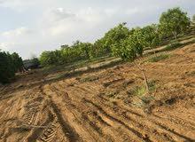 مزرعه مميزه جاهزه للبيع المزرعه متحتاج اي شي فيها عمال وشغاله