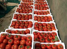 مزرعة للبيع  في  العبدلي