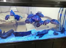 For sale large fish tank 1.50