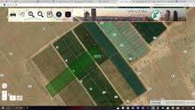 9 دنمات مزرعة وادي الضليل ارض زراعه مستويه