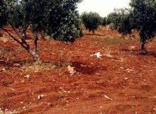 مزرعه 4 دونم للبيع مادبا-الفيحاء-غرب دوار الطياره 2كم
