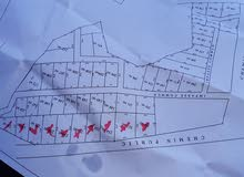 ارض للبناء بلدية مفتاح