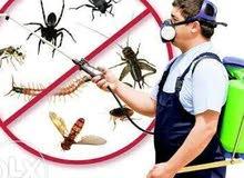 مكافحة الحشرات والقوارض والصراصير