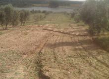 أرض زراعية للبيع بمنطقة زغوان