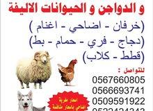 مزرعة ابوهاني لتجارة الحلال و الدواجن و الحيوانات الاليفة