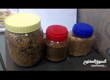 للبيع عشبة القبار (الشفلح) المعروفة في الكويت بعشبة البرجس