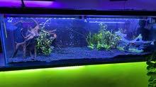 تفصيل احواض سمك حوض سمك اسماك فلاتر وتجهيز