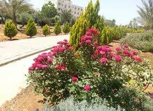 حمد السلطان ل تنسيق الحدائق وتجميلها0790344946