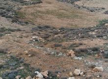أرض للبيع 801 م في وادي موسى