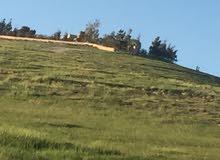 قطعة ارض للبيع حوض الشكارة شفا بدران قرب مزرعة الروابده