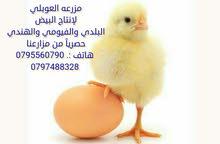 بيض فيومي للفقسات