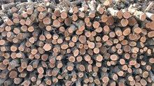 قص وتقليم جميع انواع الشجر وحطب للبيع