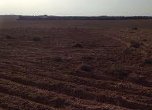 فرصة استثمارية 76 دونم زراعية بسعر 40 الف كامل القطعة