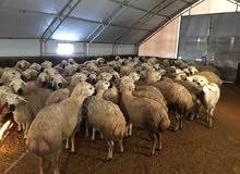 8x40 الأبقار خيمة 30x40 الشخصي.