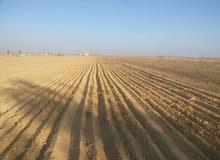ارض زراعيه للبيع في الفيوم