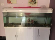 حوض سمك كامل فل الفل
