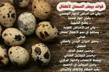 بيض السمان علاج لاغلب الامراض بإذن الله