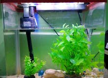 beautiful fish tank for sale