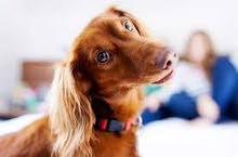 خدمات فندقية للحيوانات الليفة عاوز تسافر ومحتار تسبهم فين فندق كايلا لاستضافة الحيوانات الليفة