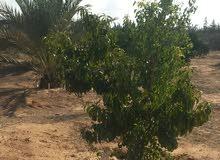 قطعة ارض للبيع ع الطريق جنوب صرمان