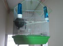 عصافير جنه