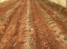 بيوت بلاستيكية زراعية مع المي للضمان في موبص