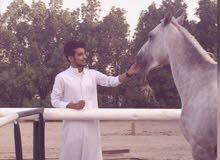 حصان عربي عمره سنه للبيع