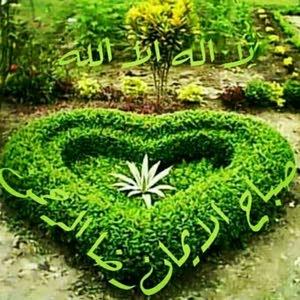 امير عبدالله مالك