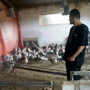 مزرعة الاصيل ،،،، دجاج وطيور