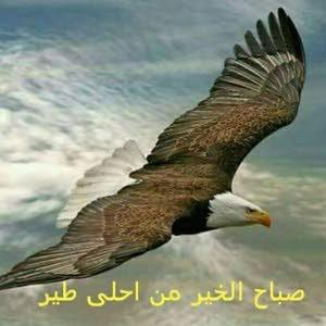 هشام عثمان