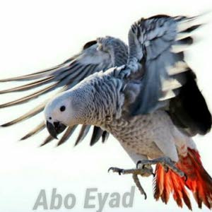 African gray parrot lover