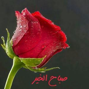 MahmoodI AL MAHROOQI