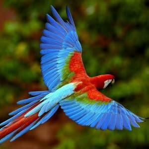 ....عاشق الطيور....