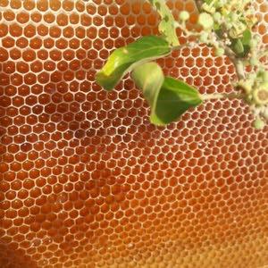 البرواني لبيع العسل الطبيعي ALBARAWNI