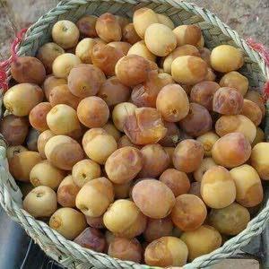 Kia Sorento in Basra