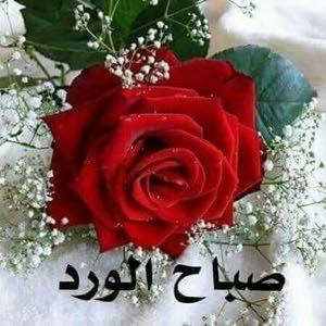 Ali. Mohammed Mohammad