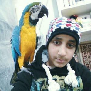 Mahmood Hyari