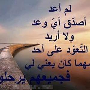 محمود الغافري