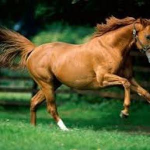الحصان الذهبي