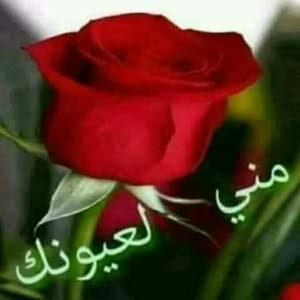 علاء alaa صكبان