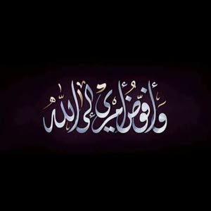 مزمل عثمان ابراهيم باشاب