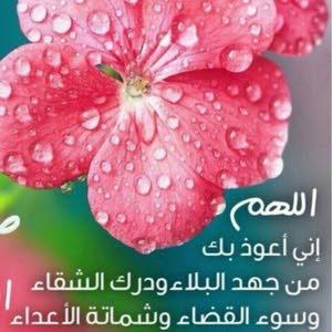 Omar محمد