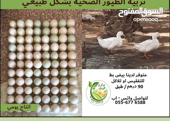 Duck Eggs for Sale